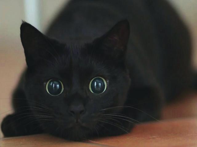 Common Health Problems in Senior Cats